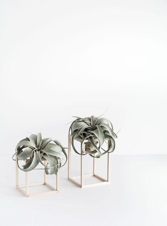 air plant.jpg