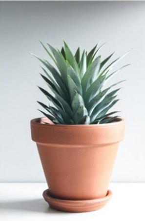 pineapple1.jpg